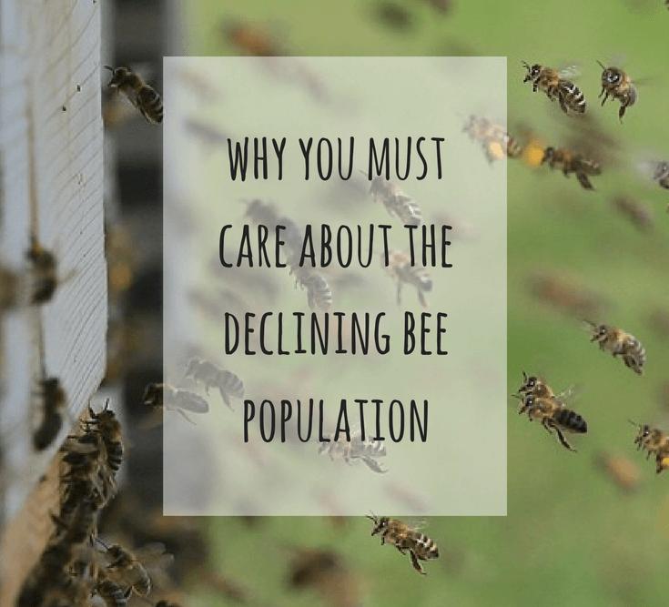 bees buzzing around hive
