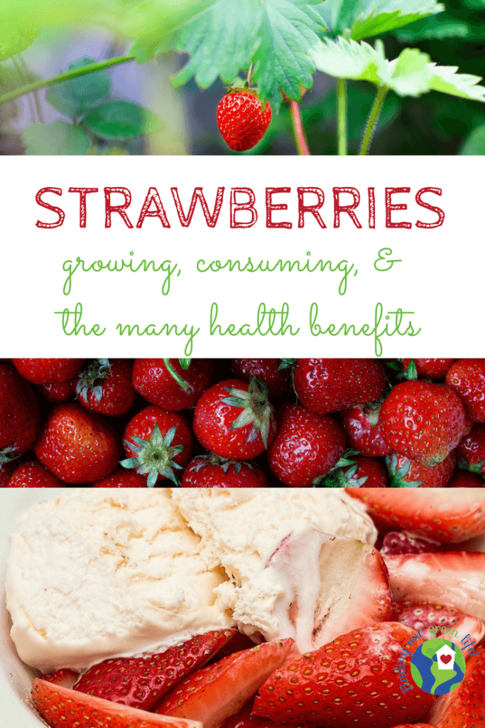 strawberry plant, picked strawberries, cut up strawberries over ice cream