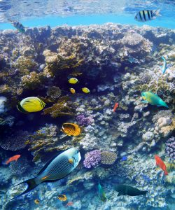 colorful fish and coral in the ocean